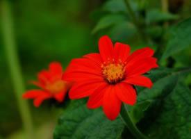 一组缤纷的花朵图片