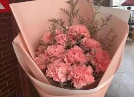 象征母爱的康乃馨花束图片