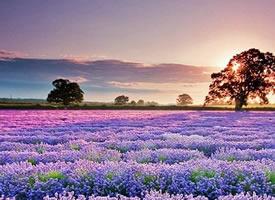 一组美丽的大自然景象图片欣赏