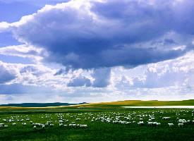 绿色大草原风景桌面电脑壁纸