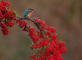 一组五彩缤纷的鸟儿拍摄图片欣赏
