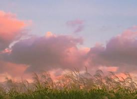 粉色天空摄影手机壁纸图片