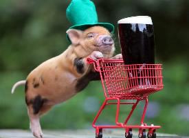 保持可爱适度撒娇的小猪图片