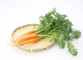 一组营养丰富的胡萝卜图片欣赏