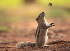 小金花松鼠机智又灵敏的样子