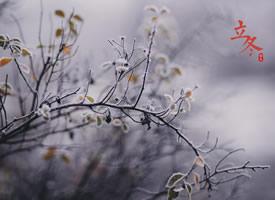 24节气立冬唯美图片桌面壁纸