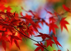 精选大自然四季美景桌面壁纸