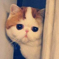 白白胖胖的可爱猫咪