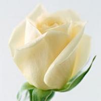 你是我最爱的花
