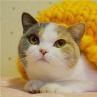 呆萌可爱的qq动物猫咪头像图片大全