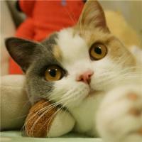 精选一组萌萌哒的微信猫咪动物头像