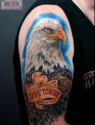 适合男士纹的手臂帅气老鹰纹身