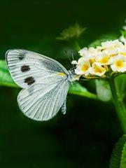 夏季昆虫高清摄影