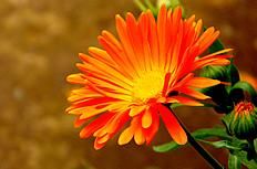 太阳花图片素材
