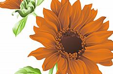 卡通太阳花图片素材