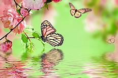 唯美蝴蝶樱花图片