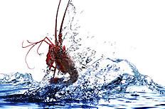 水中小龙虾图片psd分层素材