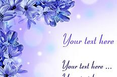 紫色风信子背景图片