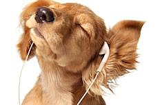 听音乐的小狗图片
