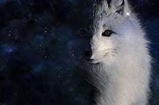 白狐狸图片