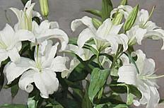 百合花花束图片