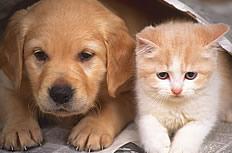 可爱小狗小猫图片