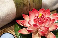 SPA莲花图片