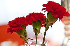 康乃馨花瓶图片