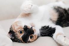 可爱小猫图片