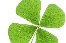 绿色四叶草图片