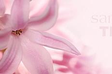 唯美粉色百合花图片