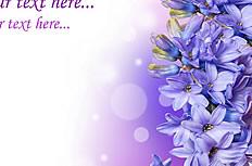 唯美紫色风信子背景图片