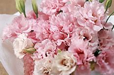 一束粉色康乃馨图片