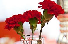 红色康乃馨花瓶图片