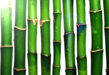 高清竹子Banner背景图片
