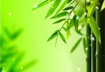 高清清雅唯美竹子背景图片