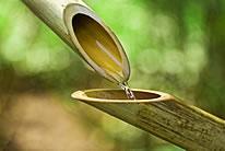 高清竹子图片素材