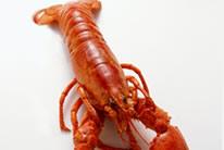 大龙虾高清图片