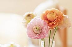 母亲节康乃馨背景图片