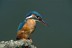啄木鸟高清摄影图片