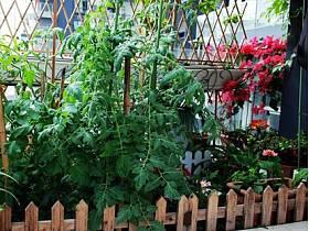 阳台植物装修效果展示
