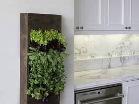 简约厨房背景墙植物设计方案