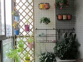 阳台植物设计方案