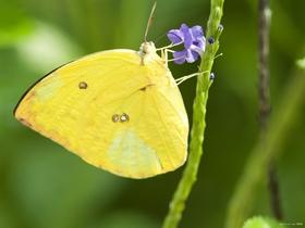 大自然的蝴蝶图片