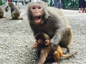 黔灵山上的猴子图片