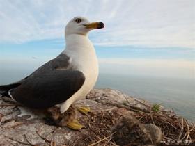 海驴岛海鸥图片