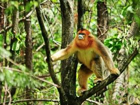 心爱的萌猴子图片