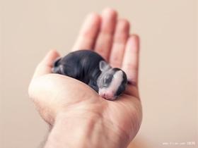 萌萌的小黑猪图片
