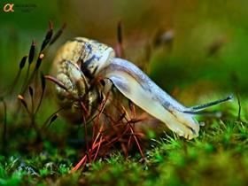 坚强的蜗牛