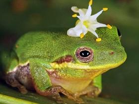 可爱的青蛙图片